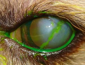 ulcera-estromal